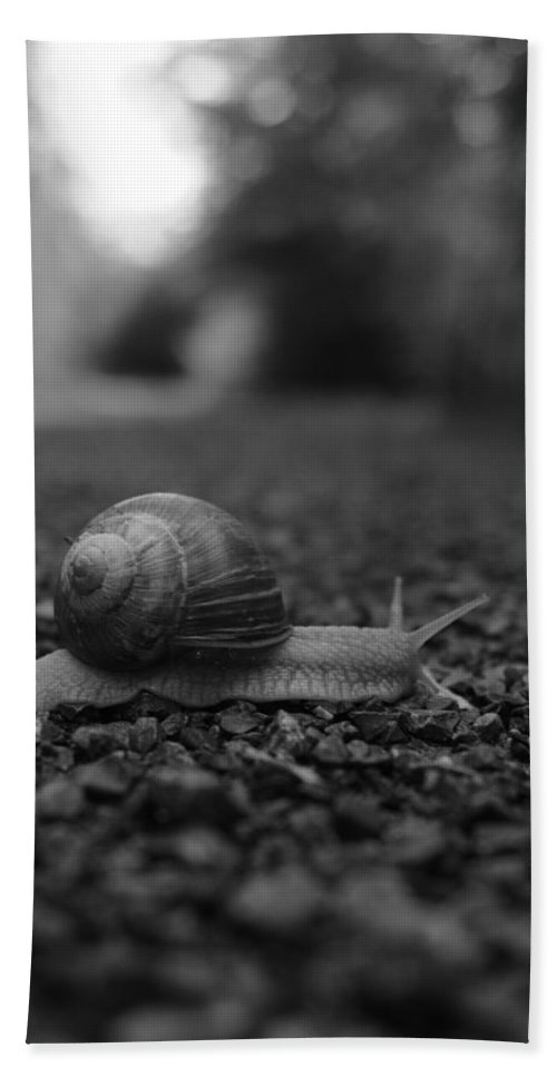 Snail Hand Towel featuring the photograph Crossing The Road by Miguel Winterpacht