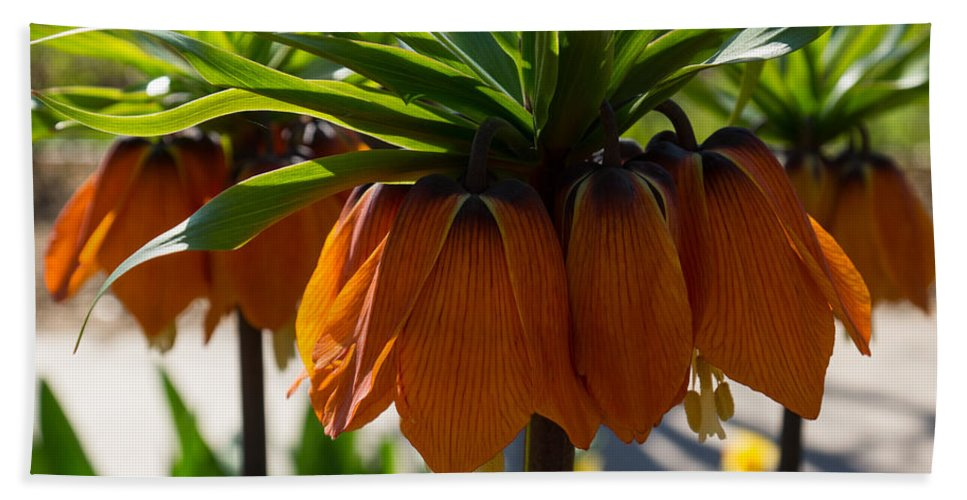 Crown Imperial Bath Sheet featuring the photograph Crown Imperial Flowers by Georgia Mizuleva