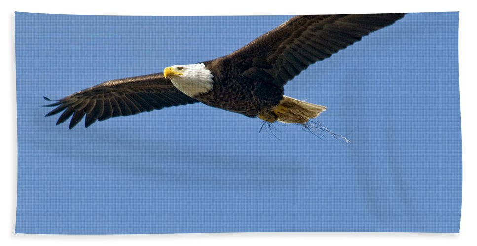 Eagles Hand Towel featuring the photograph Cruising by Claudia Kuhn