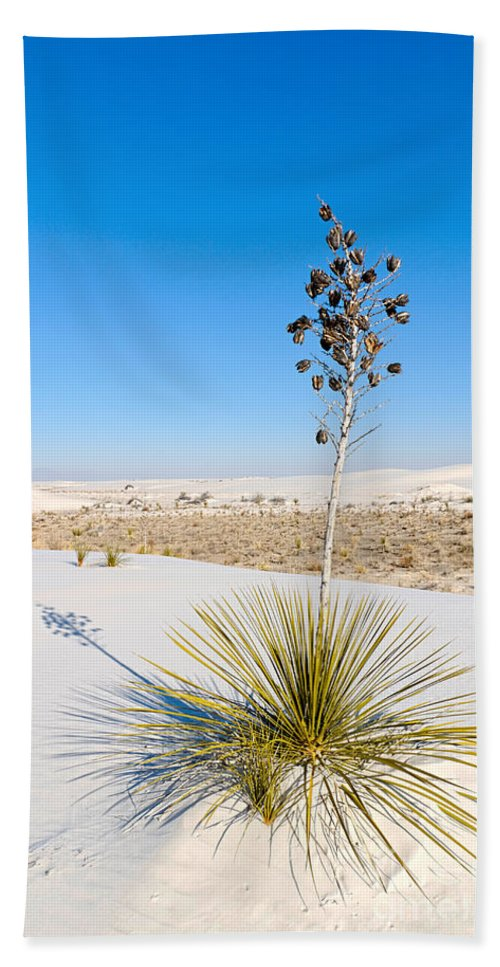 Soaptree Yucca Bath Sheet featuring the photograph Crystal Dune Tree At White Sands National Monument In New Mexico. by Jamie Pham