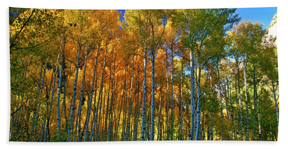 Fall Colors Hand Towel featuring the photograph Crystal Grove by Jeremy Rhoades