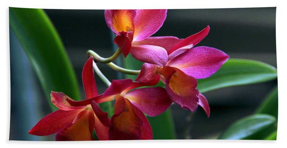 Floral Hand Towel featuring the photograph Ctna New River Orchid by Greg Allore