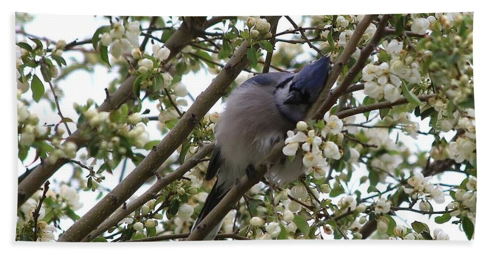 Blue Jay Hand Towel featuring the photograph Cuddling The Blossoms by Angela Koehler