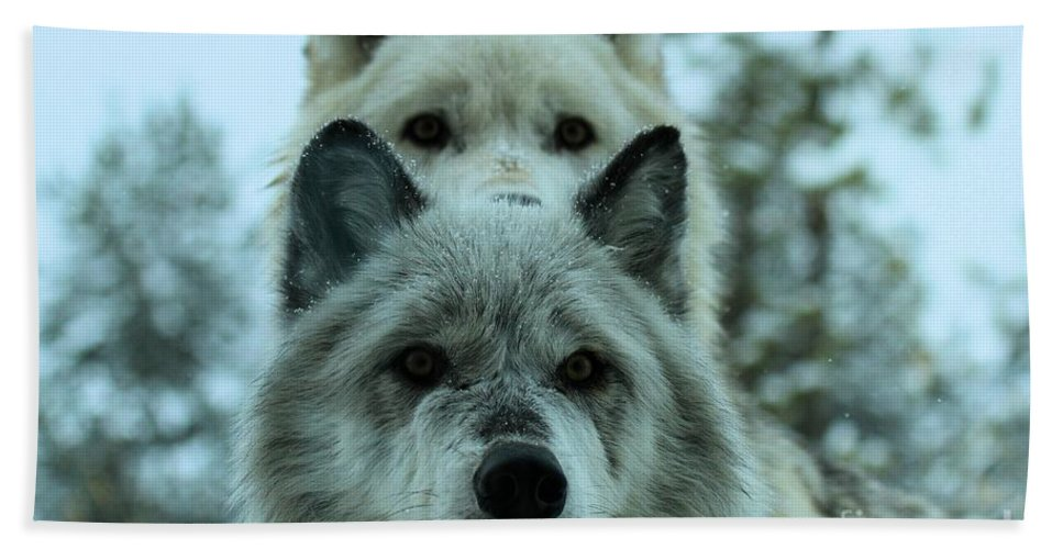 Gray Wolf Hand Towel featuring the photograph Curiosity by Adam Jewell