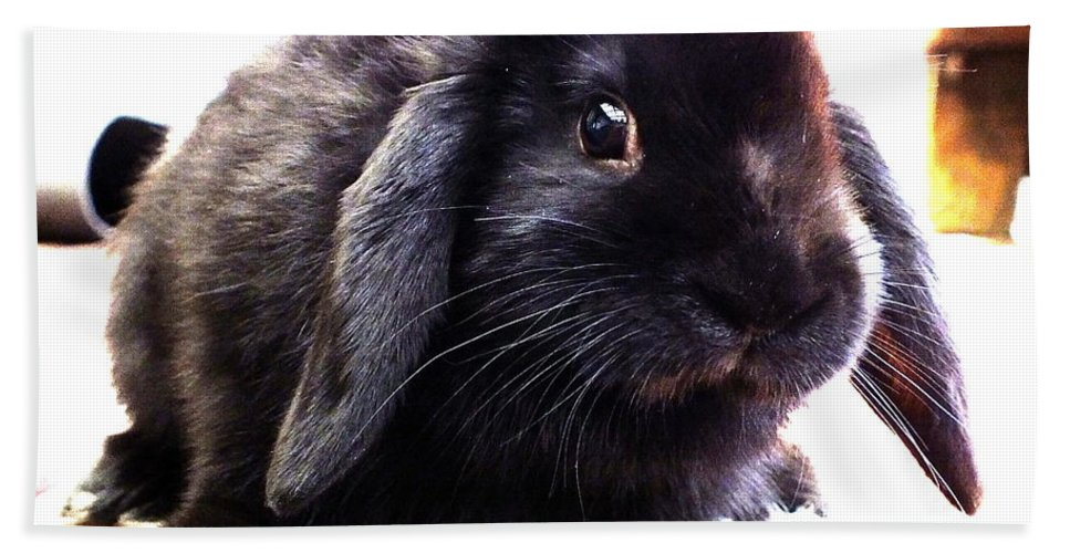 Lop Eared Black Rabbit Bunny Cute Soft Pettingell Peak Guzzi Eyes Whiskers Bath Sheet featuring the photograph Curious by Guy Pettingell