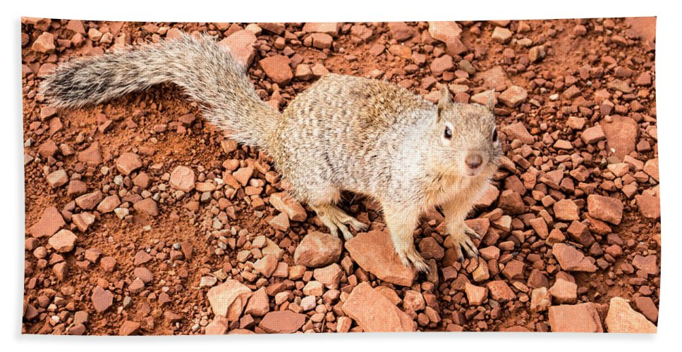 Grand Canyon Bath Sheet featuring the photograph Curious Squirrel 2 by Jamie Heeke