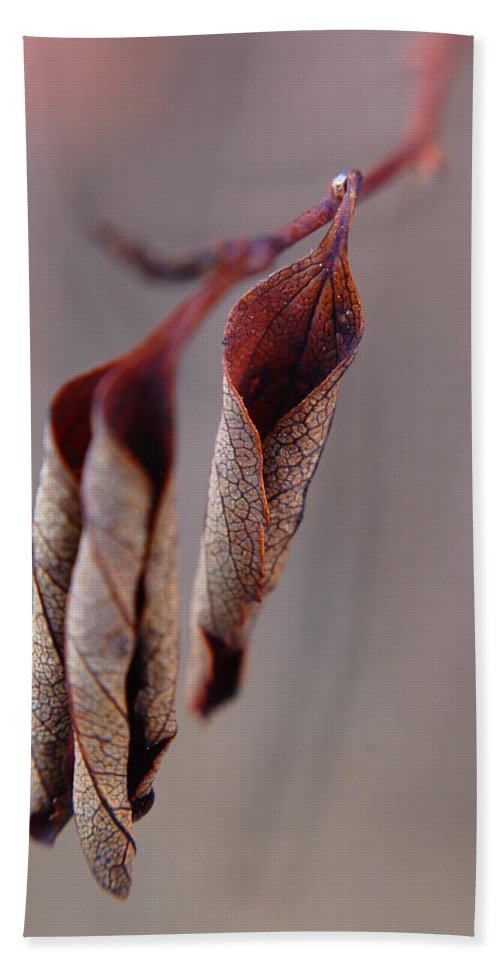 Leaf Hand Towel featuring the photograph Curled by Alea Photography