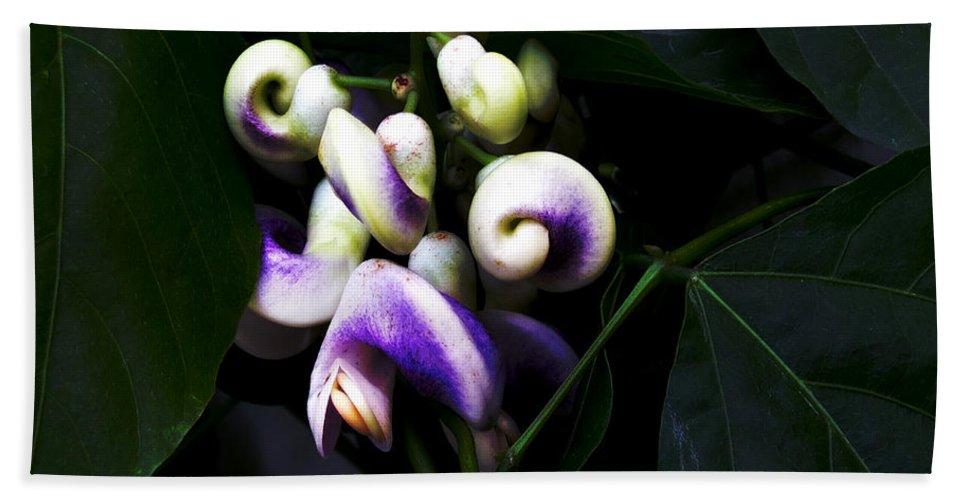 Snail Vine Bath Towel featuring the photograph Curlicues by RC DeWinter