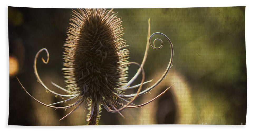 Clare Bambers Hand Towel featuring the photograph Curly And Spiky. by Clare Bambers