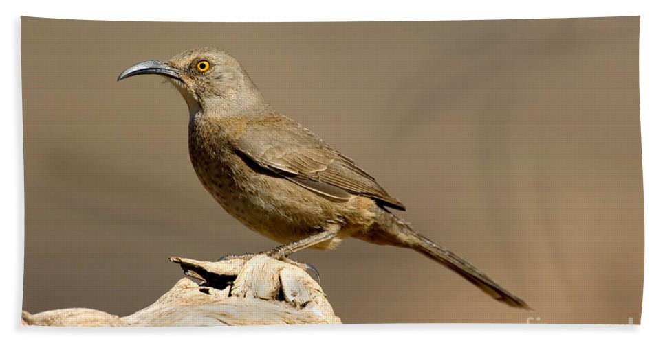 Fauna Hand Towel featuring the photograph Curve-billed Thrasher Toxostoma by Anthony Mercieca