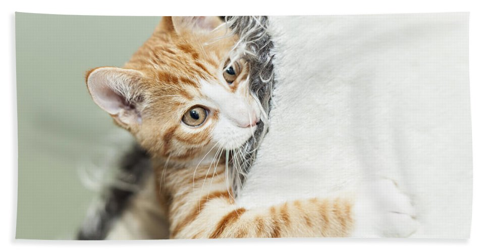 Kitten Bath Sheet featuring the photograph Cute Ginger Kitten In Igloo by Sophie McAulay