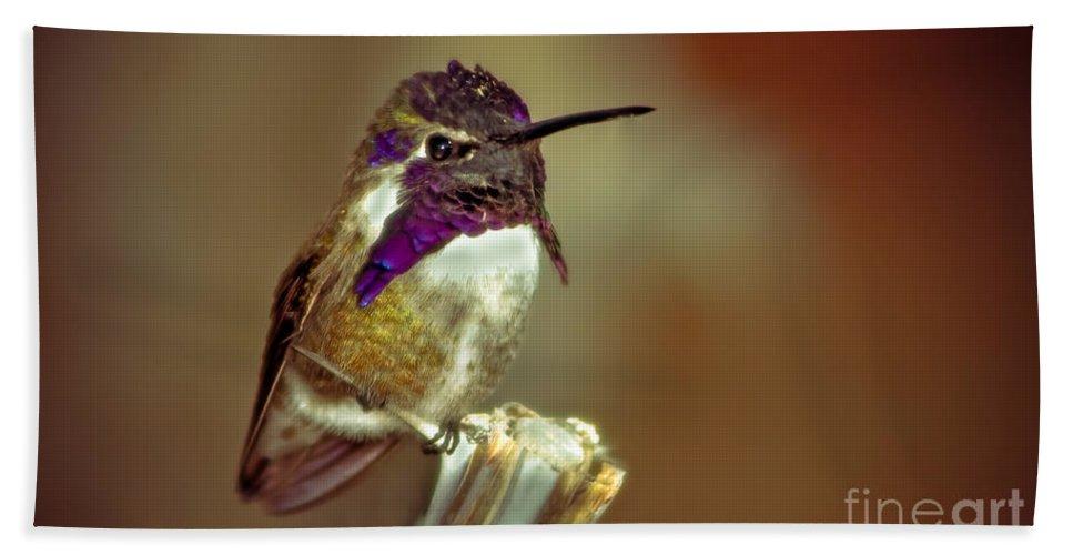 Birds Bath Sheet featuring the photograph Cute Little Costa's by Robert Bales