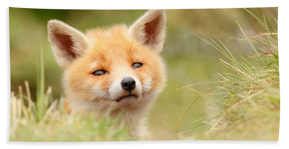 Camouflage Hand Towel featuring the photograph Cutie Face _red Fox Kit by Roeselien Raimond