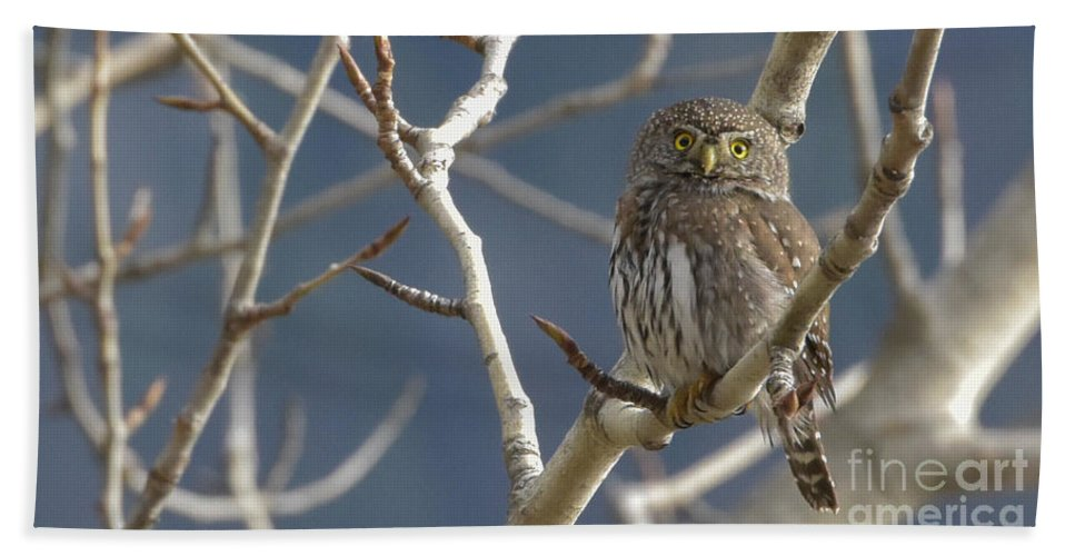 Northern Pygmy Owl Bath Sheet featuring the photograph Who Are You? Hoot Hoot Hoot Hoot by Joy McAdams