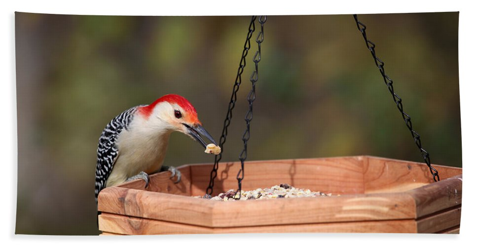 Woodpecker Bath Sheet featuring the photograph Cw Feeding by Karol Livote