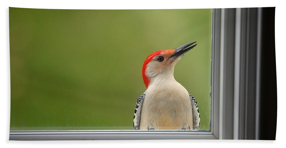 Woodpecker Bath Sheet featuring the photograph Cw My Crazy Woodpecker by Karol Livote