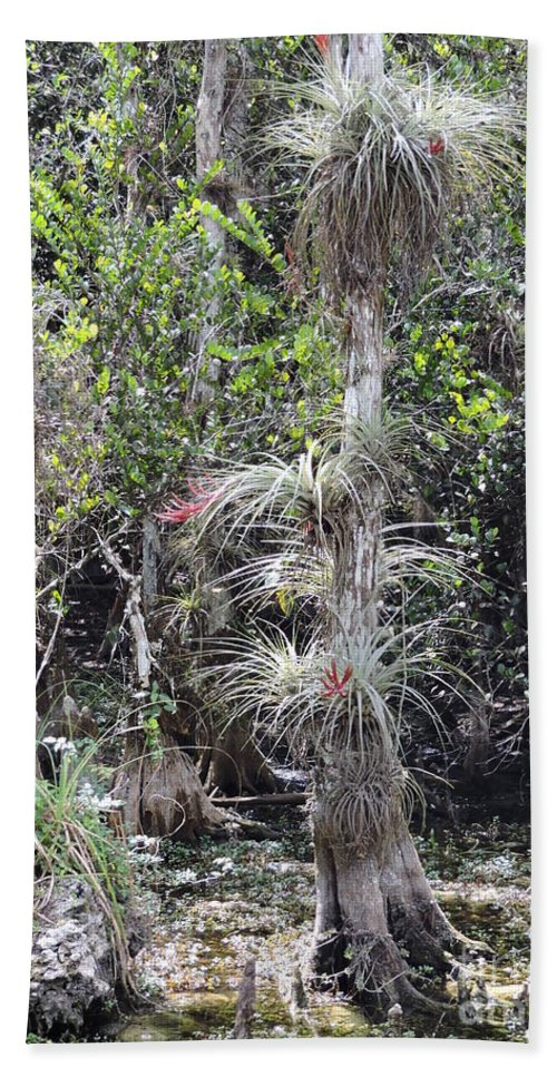 Cypress Bath Sheet featuring the photograph Cypress Airplant Display by Marilee Noland