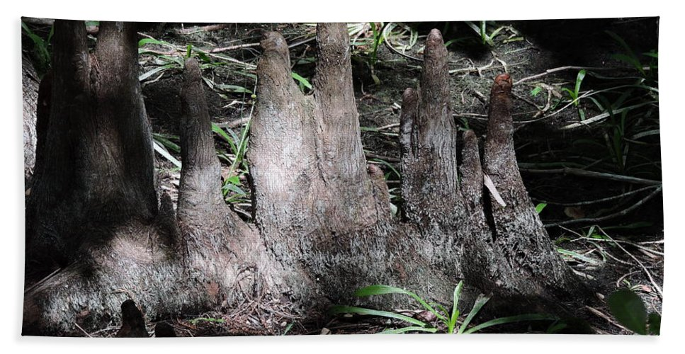 Cypress Hand Towel featuring the photograph Cypress Knees by Marilee Noland