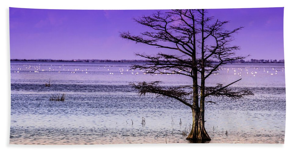 Cypress Hand Towel featuring the photograph Cypress Purple Sky 2 by Scott Hervieux