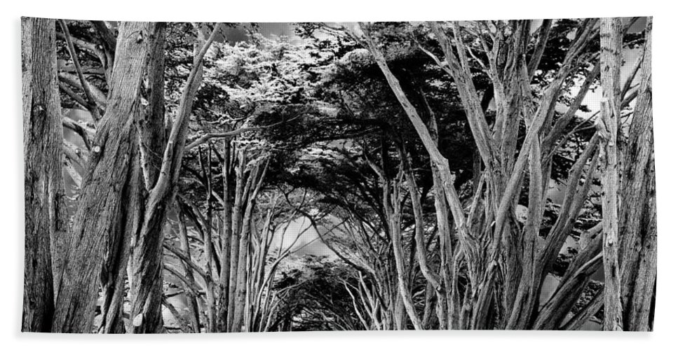 Cypress Trees Bath Sheet featuring the photograph Cypress Tree Tunnel Point Reyes by Dominic Piperata