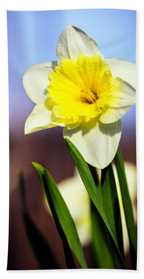 Nature Bath Sheet featuring the photograph Daffodil Blossom by Sennie Pierson