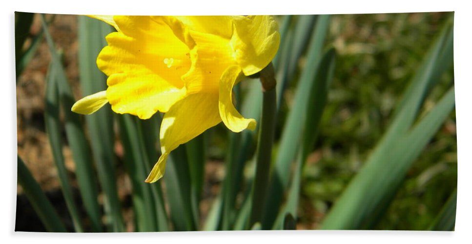 Daffodil Hand Towel featuring the photograph Daffodil by Nathanael Smith