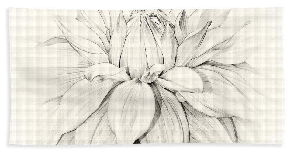 2014 Bath Sheet featuring the photograph Dahlia 3 by Janet Burdon