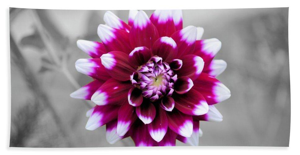 Dahlia Bath Sheet featuring the photograph Dahlia Flower 2 by Bonfire Photography