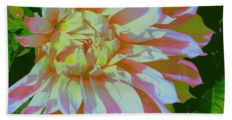 Dahlia In Pink And White - Dahlias - White Flowers - Flowers - Florals - Nature Bath Sheet featuring the photograph Dahlia In Pink And White by Dora Sofia Caputo Photographic Design and Fine Art