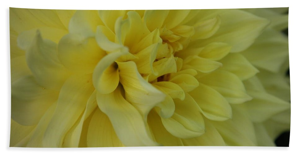 Dahlia Hand Towel featuring the photograph Dahlia Macro by Christiane Schulze Art And Photography