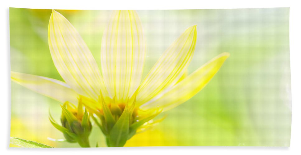 Flower Bath Sheet featuring the photograph Daisies In The Sun by David Perry Lawrence
