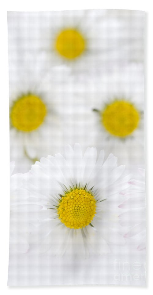 Daisy Hand Towel featuring the photograph Daisies On A White Background by Lee Avison