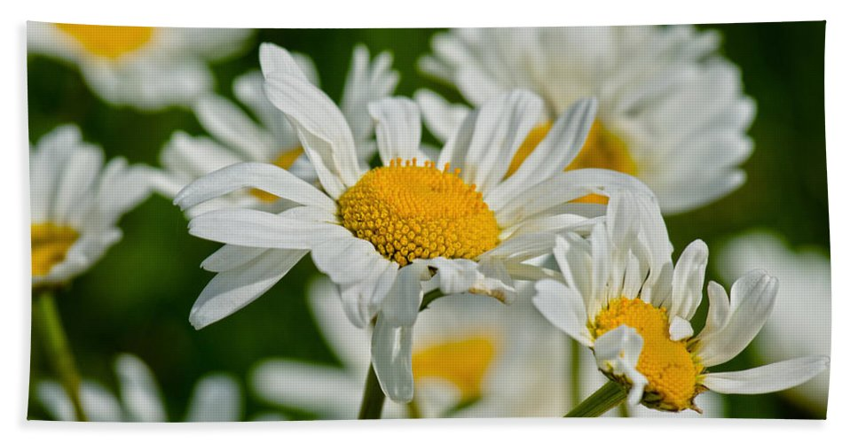 Daisy Hand Towel featuring the photograph Daisies by Scott Carruthers