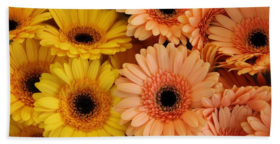 Daisy Daisies Marguerite Yellow Orange Flower Flowers Color Colorful Photograph Hand Towel featuring the photograph Daisies by Steve K