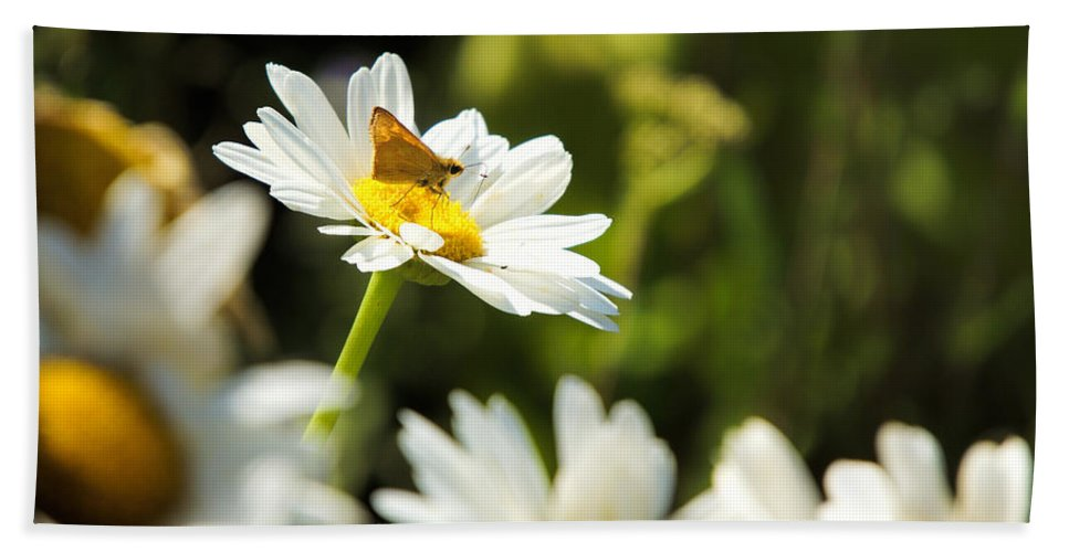 Flower Bath Sheet featuring the photograph Daisy by Alan Hutchins