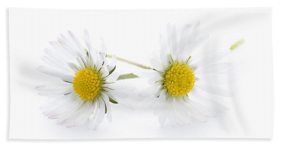 Daisy Hand Towel featuring the photograph Daisy Flowers Isolated by Lee Avison