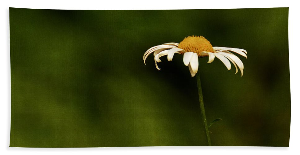 Daisies Bath Sheet featuring the photograph Daisy by Mel Hensley