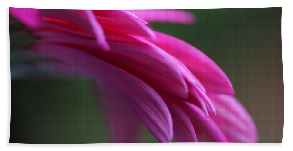 Pink Bath Towel featuring the photograph Daisy Petals by Carol Lynch