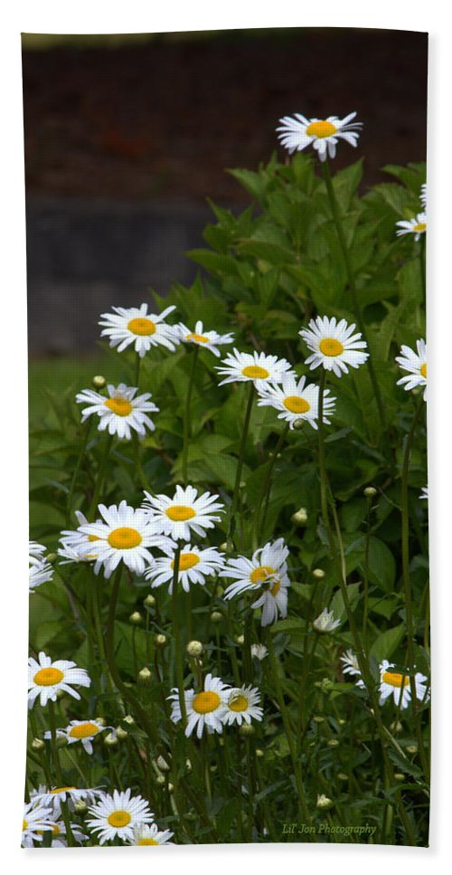 Daisy Bath Sheet featuring the photograph Daisy Splendor by Jeanette C Landstrom
