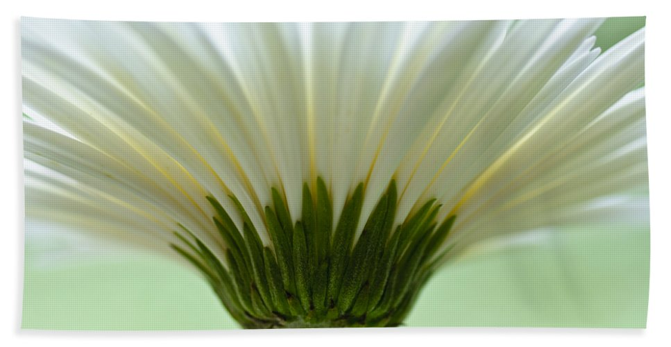 Mint Green Hand Towel featuring the photograph Daisy Sweetness by Christi Kraft