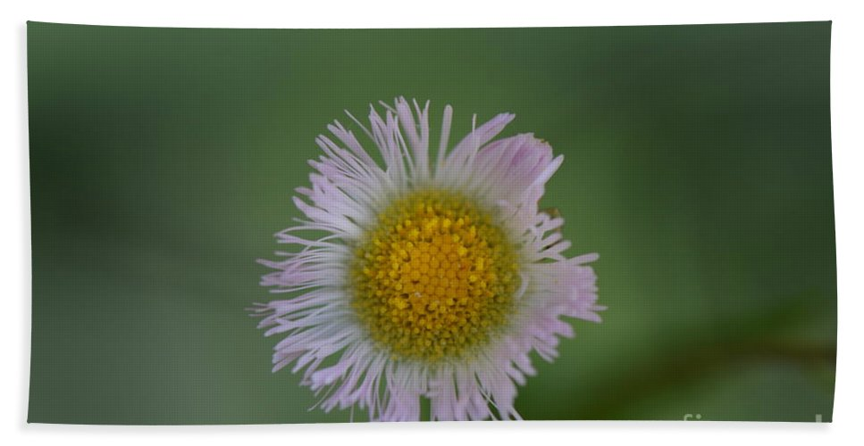 Honey Hand Towel featuring the photograph Daisy Weed Series Photo A by Barb Dalton