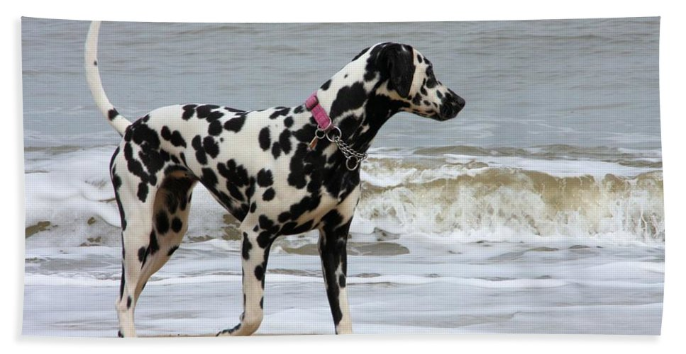 Dalmatian By The Sea Bath Towel featuring the photograph Dalmatian By The Sea by Gordon Auld
