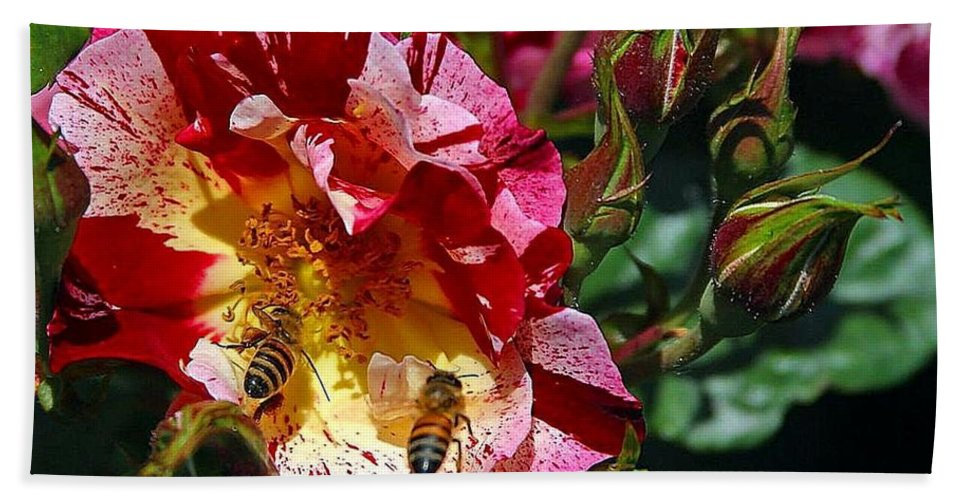 Bee Hand Towel featuring the photograph Dancing Bees And Wild Roses by Absinthe Art By Michelle LeAnn Scott