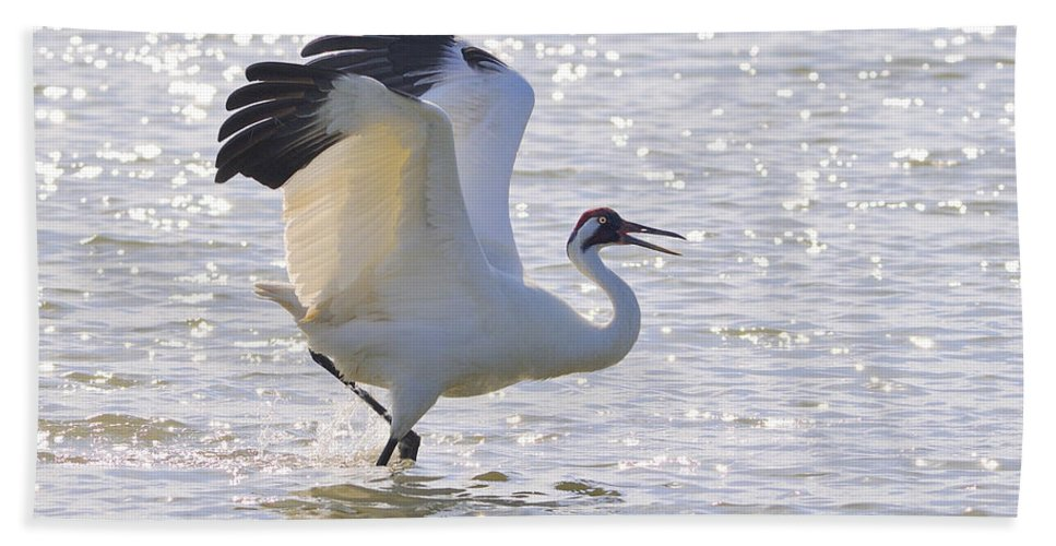 Whooping Crane Hand Towel featuring the photograph Dancing For My Lady by Tony Beck