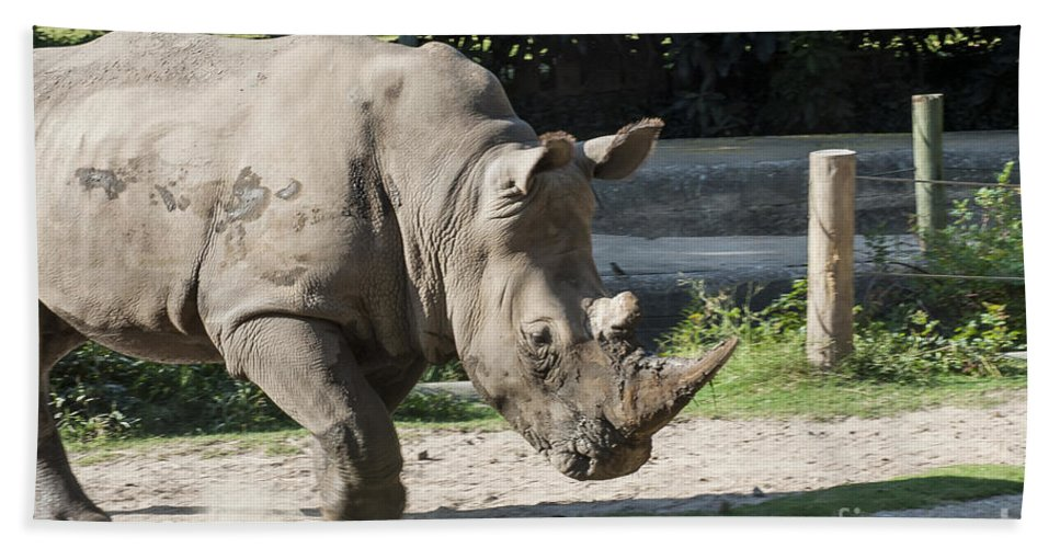 One-horned Rhinoceros Rhino Rhinos Rhinoceroses Horn Horns Animal Animals Creature Creatures Louisiana Purchase Gardens And Zoo Monroe Nature Hand Towel featuring the photograph Dancing Rino by Bob Phillips