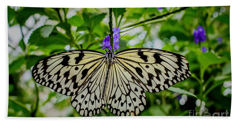 Paper Kite Bath Sheet featuring the photograph Dancing With Butterflies by Jon Burch Photography