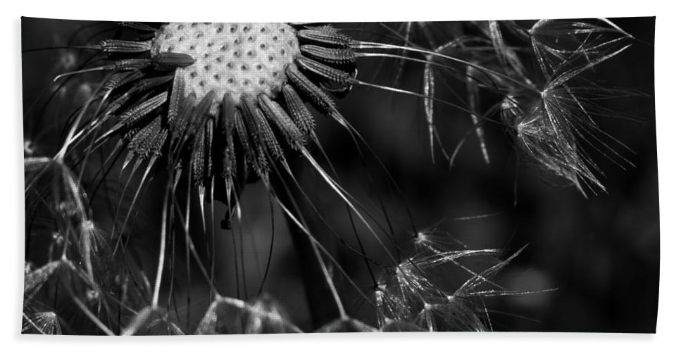 Make A Wish Hand Towel featuring the photograph Dandelion Burst by Ernie Echols