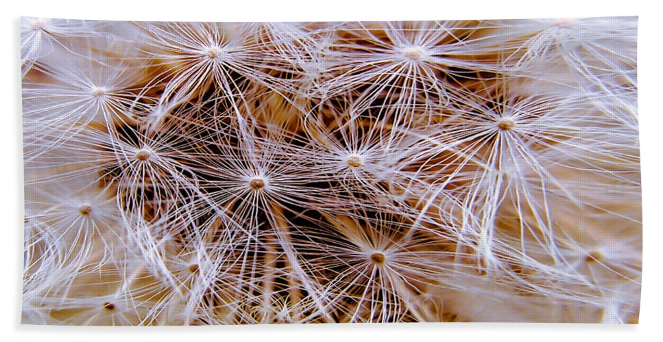 Dandelion Hand Towel featuring the photograph Dandelion Closeup by Sherman Perry
