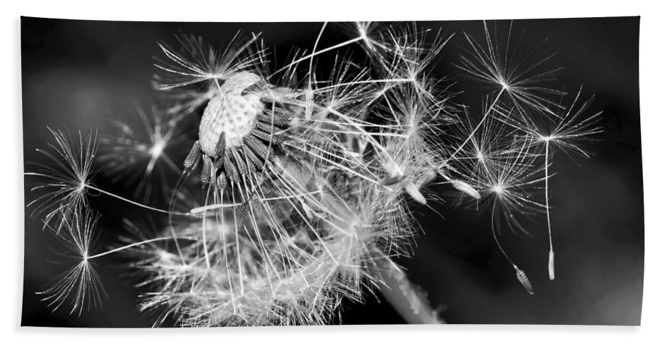 Photography Bath Sheet featuring the photograph Dandelion Glow by Kaye Menner