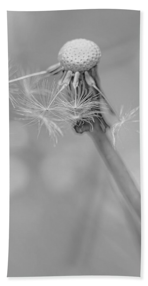 Dandelion Hand Towel featuring the photograph Dandelion Last To Fly Away Monochrome by Jennie Marie Schell